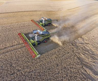 A pair of Lexion 780TT models with 13.5m headers